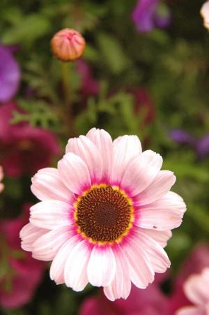 flower0016